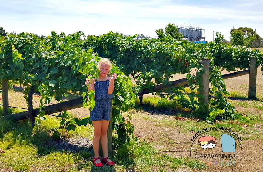 Kids & Wineries…