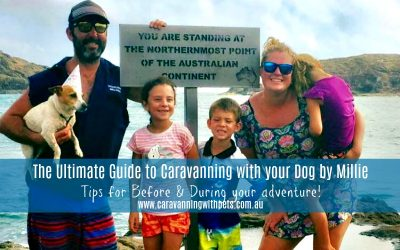 Top Tips for Travelling with your Dog | The Dog Blog by Millie