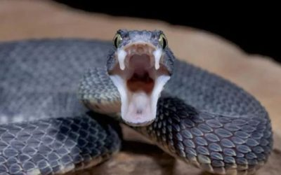 5 Top News & Articles about Snake Bites